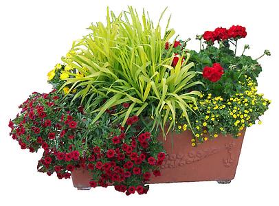 trogolo di fiori, fiori, impianto, fiore, pianta, natura, decorazione