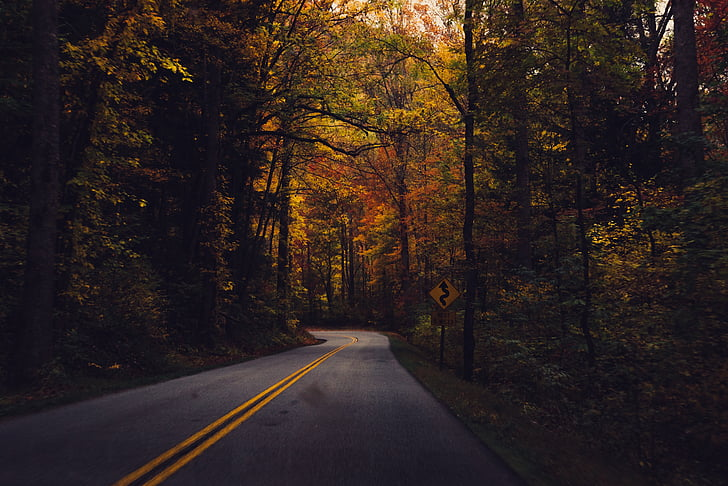 country road, forest, road, country, rural, nature, countryside