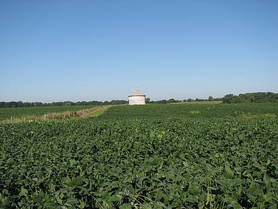 soybean, field, silo, farm, rural, agriculture, crop