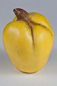 quince, yellow, fruits, pome fruit, fruit, quince fruit, fruit tree