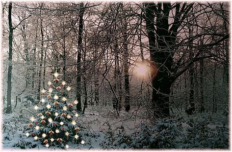 christmas tree, christmas, sparkle, decoration, fir, branch, christmas ornaments