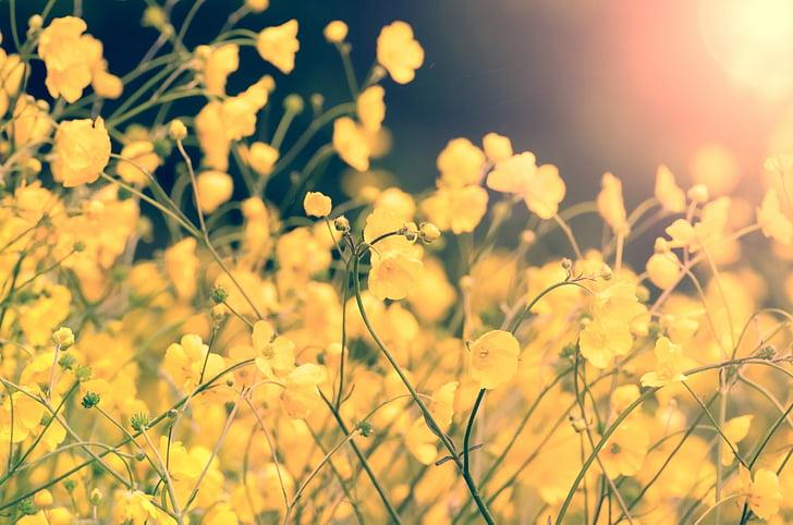 λουλούδι, το καλοκαίρι, άνοιξη, Κίτρινο, κηπουρική, Κήπος, διακόσμηση