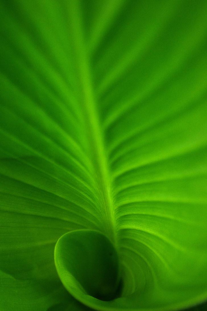 spiral, spiral blad, grønn, grønne blad, grønne spiral blad, dyp, natur