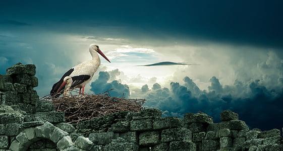 stork, nest, bird, nature, wildlife, animal, beak