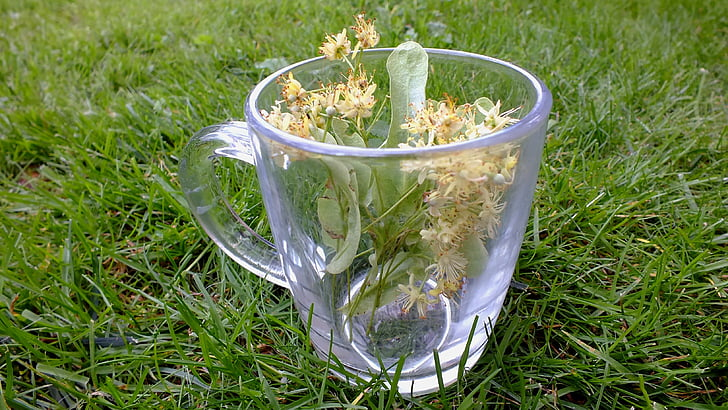 herbs, herbal tea, linden flowers, plants, tea, medical, healthy