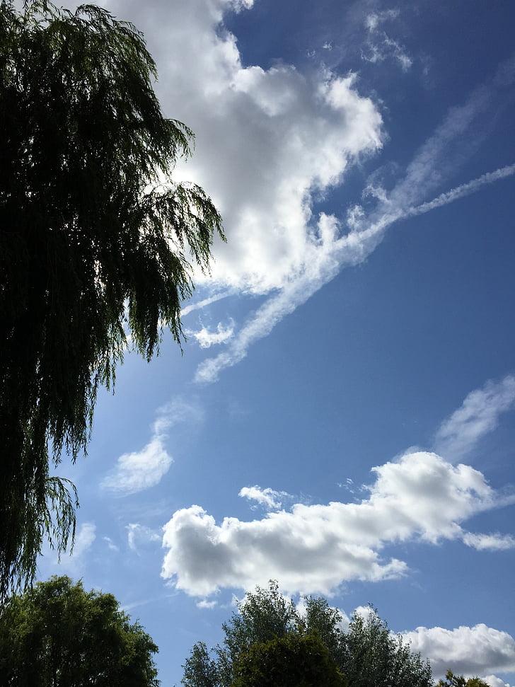 õhu, pilved, lennuk, sinine taevas, pilve, taevas, loodus