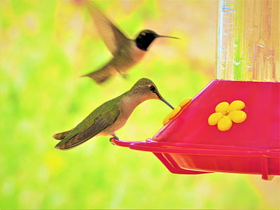 humming bird, colorful, green, yellow, red