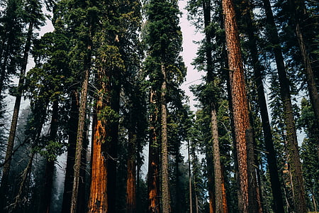 trees, woods, forest, travel, adventure, green, leaves