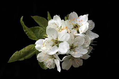 flowers, blossom, spring, spring flowers, nature, plant, summer
