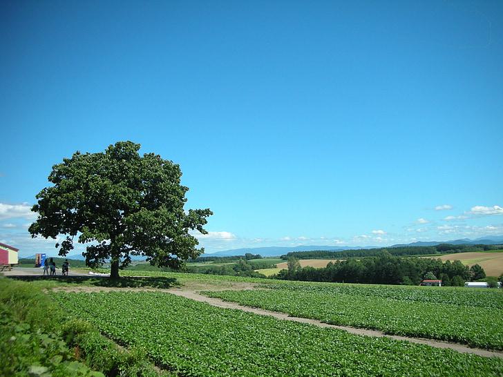 cel blau i verd, escena, paisatge