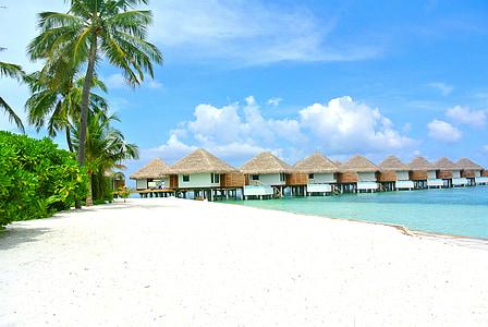Maldives, platja, coco, sorra blanca, complex, vacances, vocació