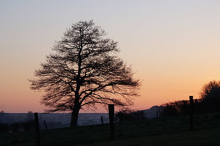tree, nature, landscape, sunset, silhouette, outdoors, dusk