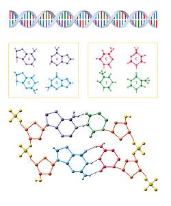 DNA, Biologia, ciência, molécula, genética, Gene, médica