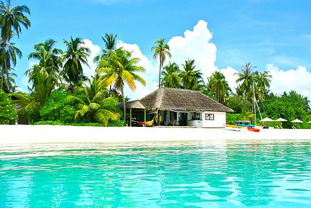 Maldives, arbre de coco, Mar, complex, l'estiu, vacances, cel