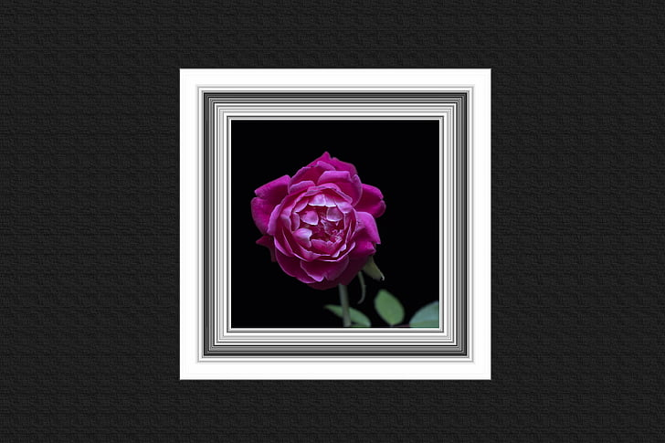 wall, frame, painting, rose, retro, rustic