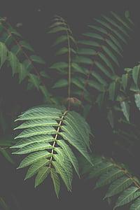 zelená, list, závod, před olistěním, listoví, zelená barva, růst
