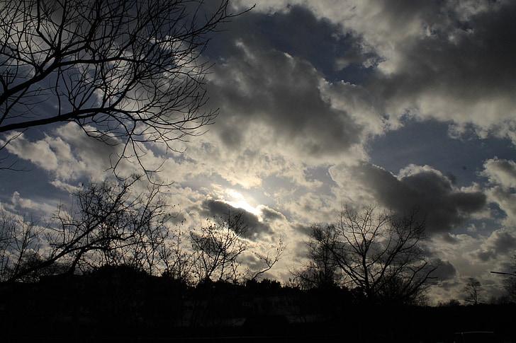 wolken, esthetische, bomen, bewolking, stemming, sfeer