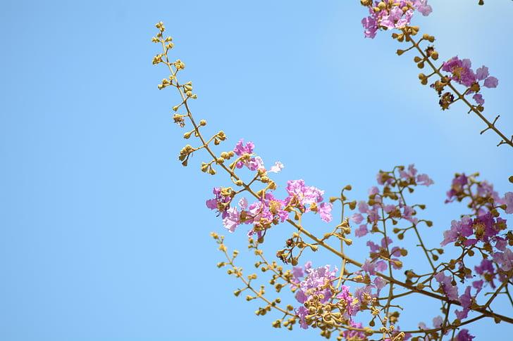 flowers, purple, purple flowers, cho, refreshing, nature, plant
