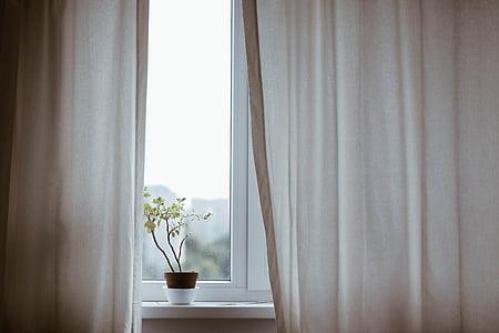 gardiner, dekoration, inomhus, Anläggningen, potten växt, fönster, gardin