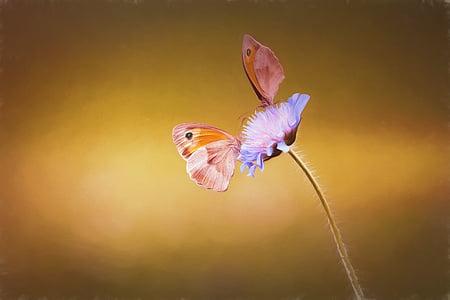 afbeelding, schilderij, verf, geschilderd, vlinders, twee, twee vlinders