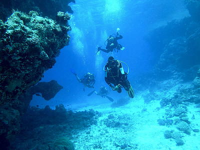 diving, underwater, sea, float, breathing apparatus, scuba divers, underwater world