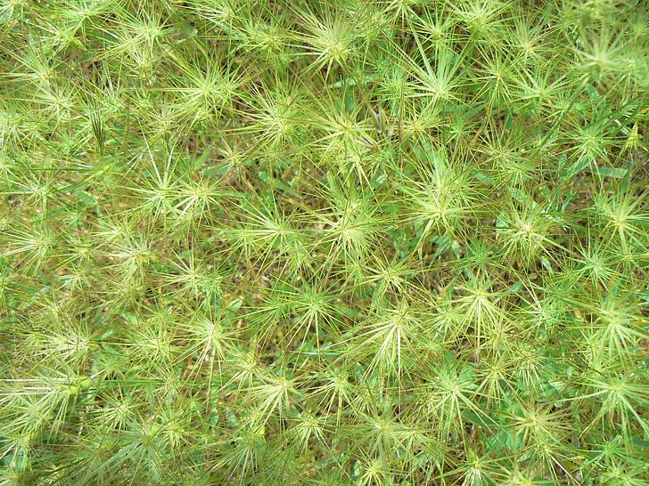 græs, Star, grøn, tekstur