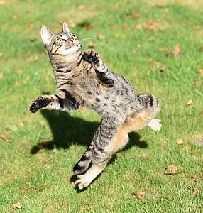 cat, play, start, mackerel, grass, tiger cat, cheeky