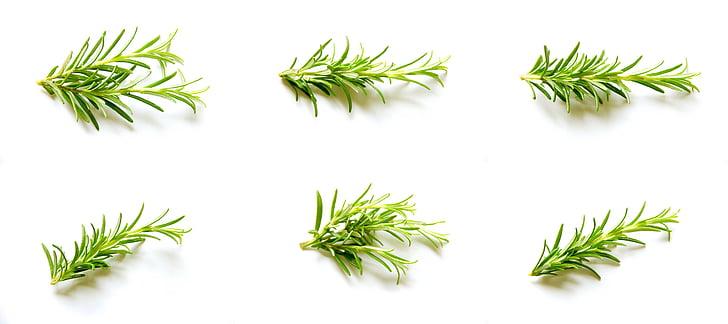 rosmarin, ställa in, Collection, naturliga, ekologisk, krydda, gård