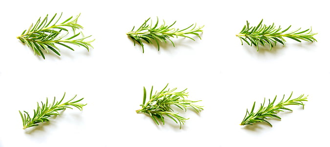 rosemary, set, collection, natural, organic, spice, farm