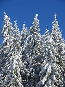 winter, tree, snow, winter trees, wintry, cold, tree trunks