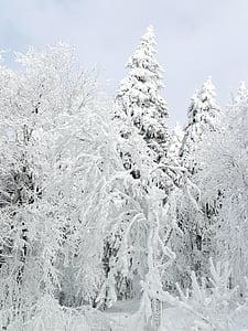 invierno, nieve, hielo, frío, invernal, Blanco, árbol