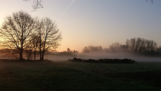 Alba, arbres, matí, morgenstimmung, natura, paisatge, impressió