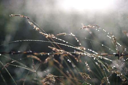 növény, a reggeli harmat, fennsík, természetes, természet, Harmat, fagy