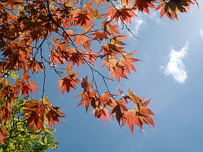 tree, leaves, sky, nature, leaf, foliage, natural