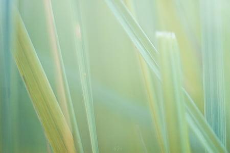nature, grass, macro, background, desktop, backgrounds, plant