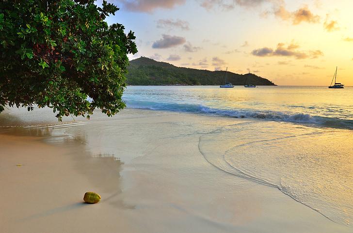 platja, Alba, l'estiu, Mar, cel, paisatge, sol