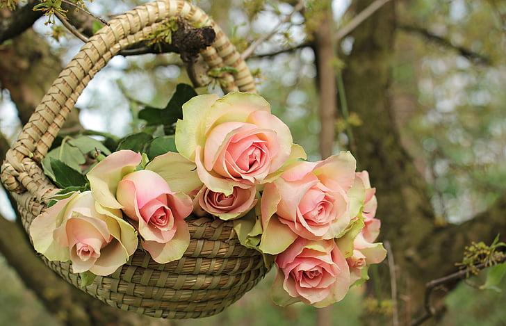 ruža, plemenite ruže, košara, drvo, grana, cvijeće, roza