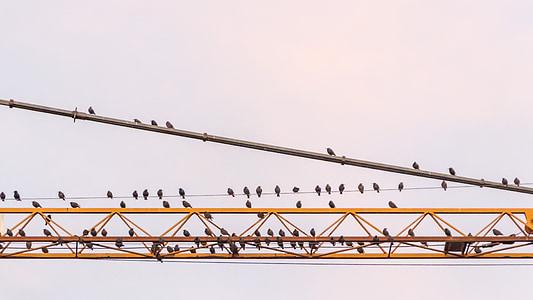 прелетни птици, събира, Рали точка, заминаване, стадо от птици, миграция на птиците, Крейн