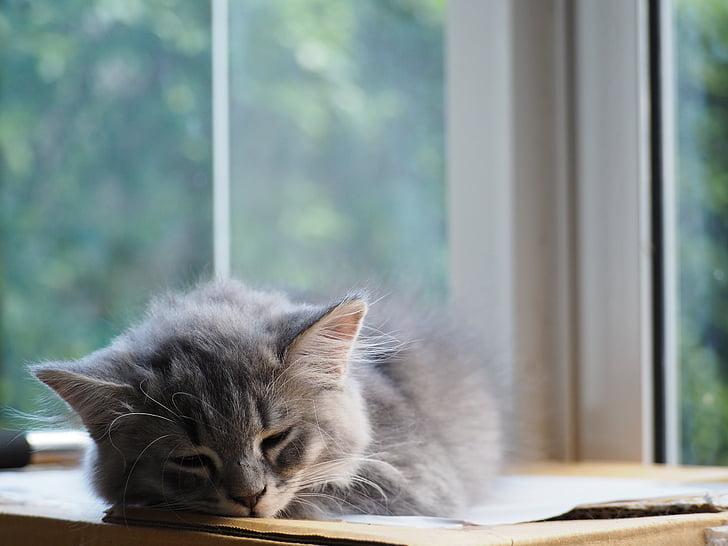 gat, adormit, son, valent, la capacitat per, relaxar-se, relaxant