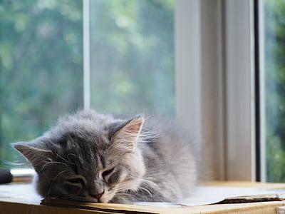 kass, magama, uni, Nunnu, Kui magades, lõõgastuda, lõõgastav