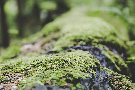 moss, forest, ground, nature, mushroom, green, tree stump