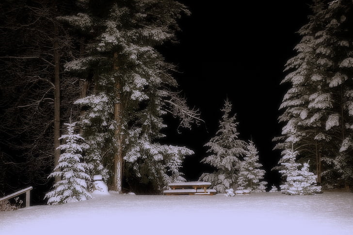 winter, winter dream, snow, cold, trees, night