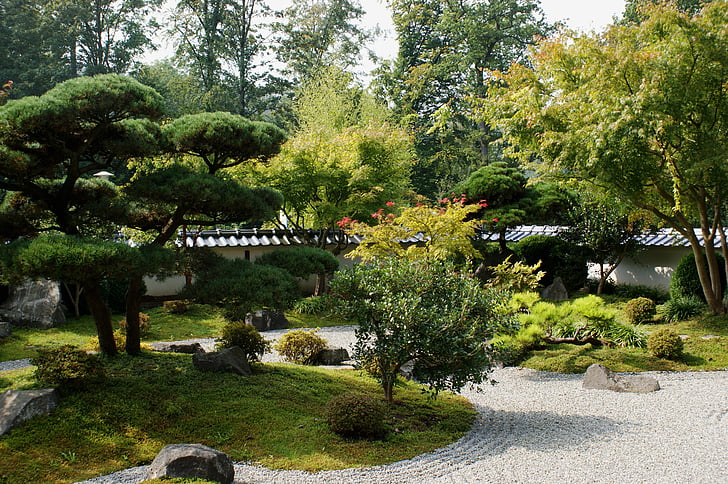 Tuin, bomen, plant, groen, botanische tuin, natuur