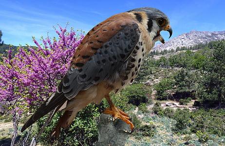 falcon, bund hawk, falconry, hunting, bird of prey, chase, castle
