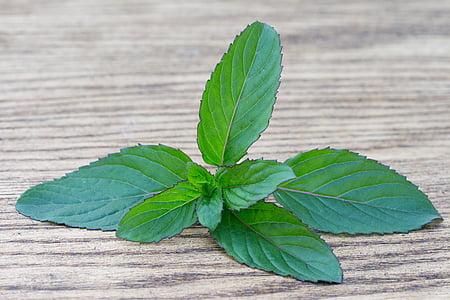 罗勒, 香料, 药草, 绿色香料, 生物, 植物, 宏观