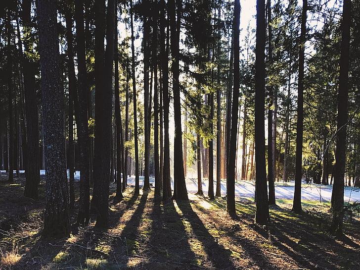 bosc, arbres, natura, paisatge, inundat, llum, boscos