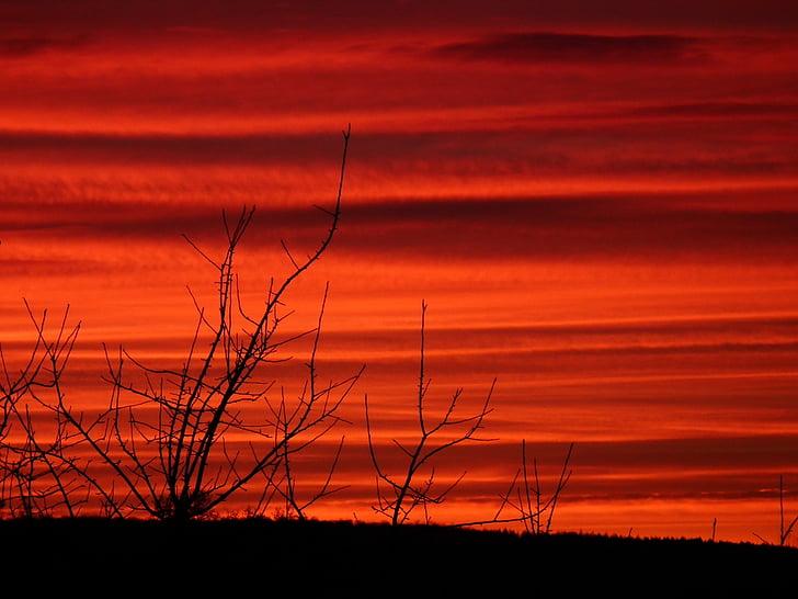 вечерта, клонове, храсти, Прочистете, залез, небе, червен