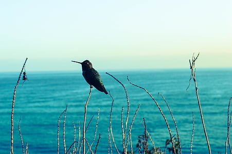hummingbird, seaview, blues, bird, sea, nature, blue