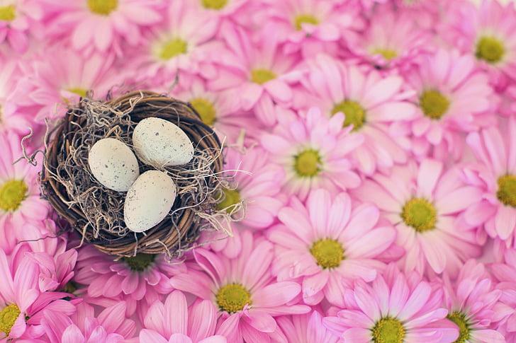 Пташине гніздо, Яйця птахів, рожевий ромашки, Весна, сезон, Великдень, гніздо