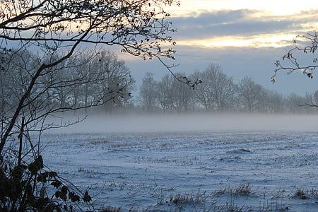 fog, winter, fog bank, dusk, snow, landscape, nature